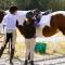 Sportoktató OKJ képzés (lovaglás)